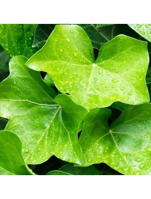 https://www.louis-herboristerie.com/14229-home_default/lierre-grimpant-bio-articulations-respiration-teinture-mere-hedera-helix-50-ml-herbiolys.jpg