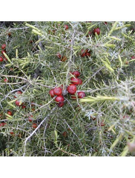 Genévrier Cadier Bio - Antiseptique Teinture-mère Juniperus oxycedrus 50 ml - Herbiolys