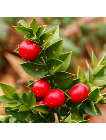 Petit Houx Bio - Circulation Teinture-mère Ruscus aculeatus 50 ml - Herbiolys