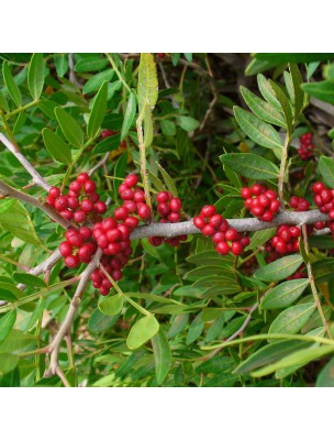 Lentisque Pistachier Bio - Circulation Teinture-mère Pistacia lentiscus 50 ml - Herbiolys