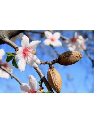 https://www.louis-herboristerie.com/14583-home_default/pranabb-amande-douce-huile-de-massage-bio-nourrit-et-adoucit-la-peau-de-bebe-30-ml-pranarom.jpg