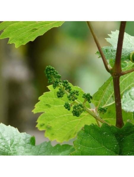 Vigne rouge Bio - Circulation Teinture-mère Vitis vinifera rubra 50 ml - Herbiolys