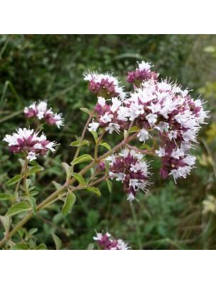 https://www.louis-herboristerie.com/14833-home_default/origan-compact-bio-huile-essentielle-origanum-compactum-10-ml-pranarom.jpg