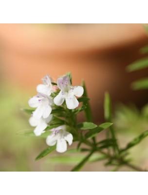 Sarriette des Montagnes Bio - Tonique & Antiparasitaire Teinture-mère Satureja montana 50 ml - Herbiolys