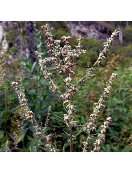 Armoise - Partie aérienne coupée 100g - Tisane d'Artemisia vulgaris L.