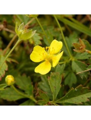 https://www.louis-herboristerie.com/15284-home_default/potentille-tormentille-bio-detox-digestion-teinture-mere-potentilla-tormentilla-erecta-50-ml-herbiolys.jpg