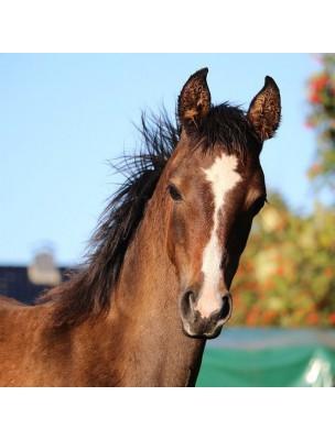 Cush X Gold - Syndrome de Cushing des chevaux 1 Litre - Hilton Herbs