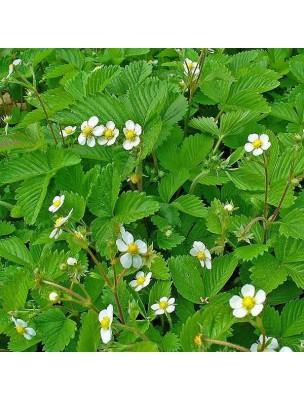 https://www.louis-herboristerie.com/15545-home_default/fraisier-feuilles-coupees-100-g-tisane-fragaria-vesca.jpg
