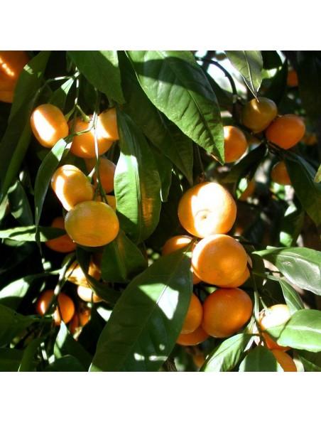 Mandarine - Détente 30 capsules aromatiques - Pranarôm
