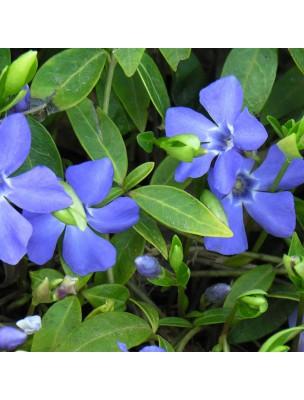 https://www.louis-herboristerie.com/15843-home_default/petite-pervenche-bio-acouphenes-memoire-teinture-mere-vinca-minor-50-ml-herbiolys.jpg