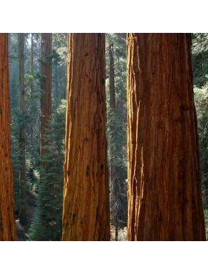 Séquoia Macérât de jeune pousse 1DH Bio - Homme & Capital osseux 50 ml - Herbiolys