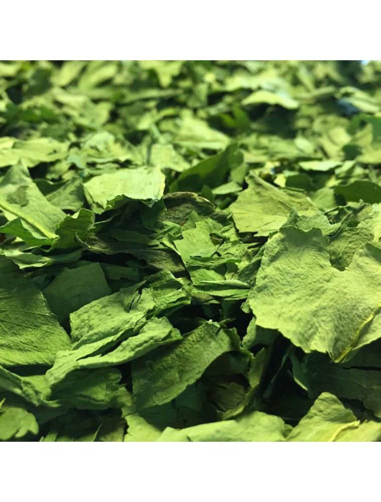 Ail des Ours Bio - Feuille coupée 100g - Tisane d'Allium ursinum