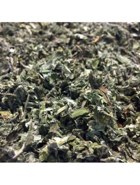 Armoise - Feuille coupée 100g - Tisane d'Artemisia vulgaris L.