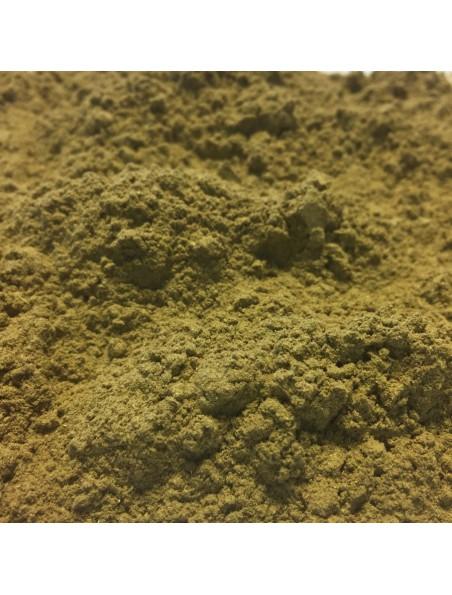Alchémille Bio - Partie aérienne en poudre 100g - Alchemilla vulgaris L.