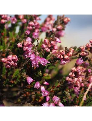https://www.louis-herboristerie.com/16527-home_default/bruyere-bio-fleurs-et-feuilles-100g-tisane-calluna-vulgaris-l-hull.jpg