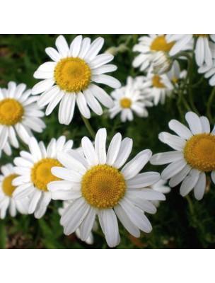 Camomille romaine Bio (noble) - Fleurs 50g - Tisane Chamaemelum nobile (L.) All.