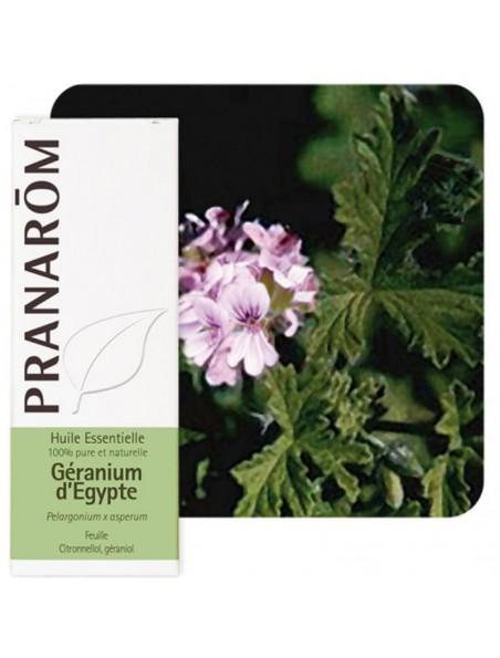 Géranium d'Egypte - Huile essentielle de Pelargonium x asperum 10 ml - Pranarôm