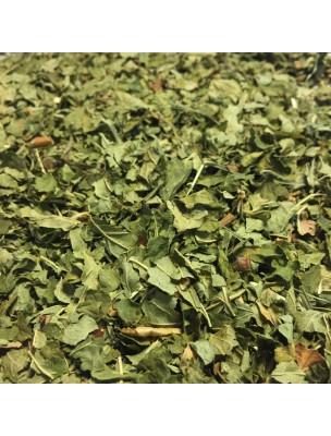 Cassis Bio - Feuilles brisures 100g - Tisane de Ribes nigrum