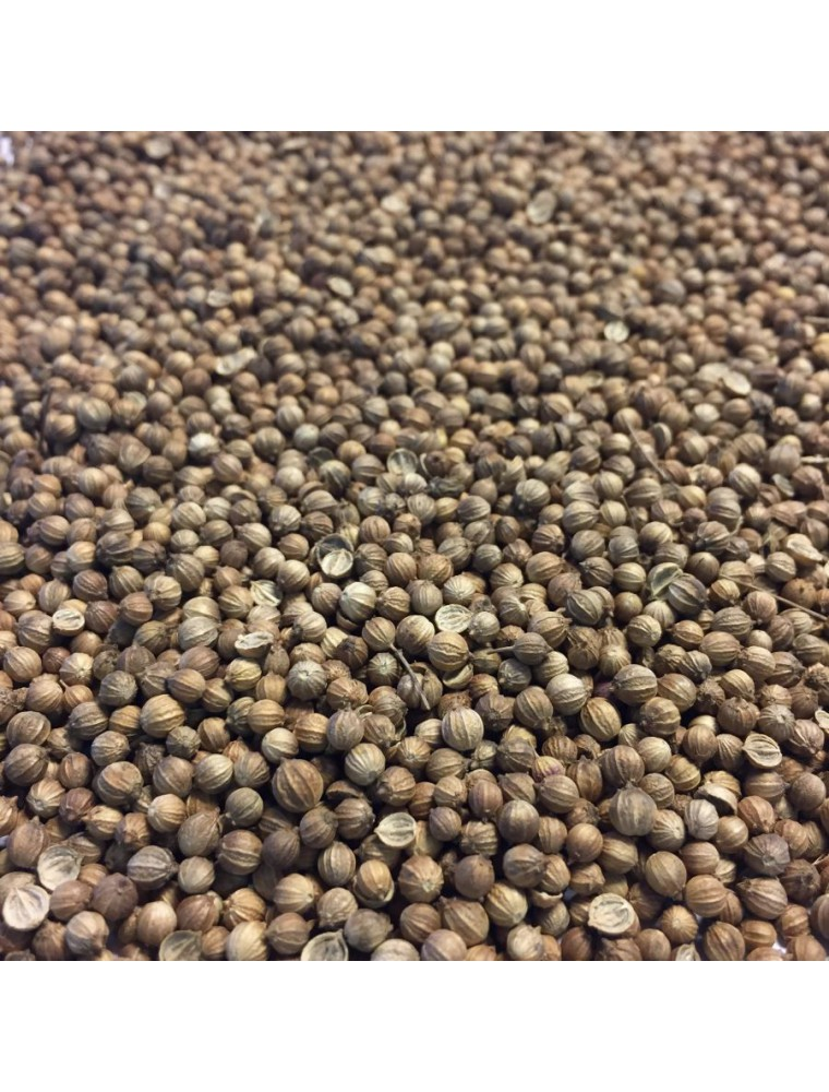 Coriandre Bio - Fruit 100g - Tisane Coriandrum sativum L.