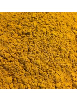 Curcuma Bio - Rhizome en poudre 50g - Curcuma longa L.