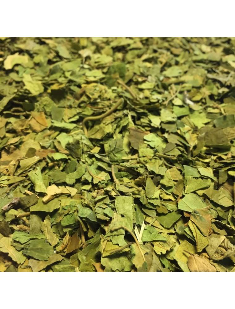 Gymnema sylvestre - Feuille coupée 100g - Tisane de Gymnema sylvestris