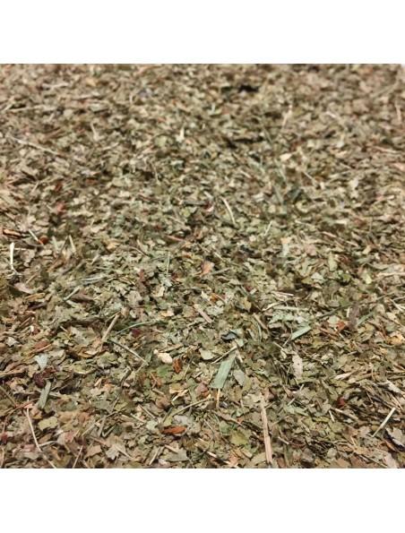 Myrtille Bio - Feuilles coupées 100g - Tisane de Vaccinium myrtillus L.