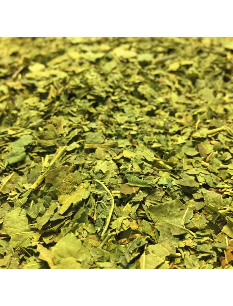 Mûrier noir - Feuilles coupées 100g - Tisane Morus nigra L.