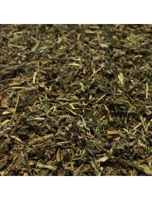 Véronique d'Europe - Partie aérienne 100g - Tisane Veronica officinalis
