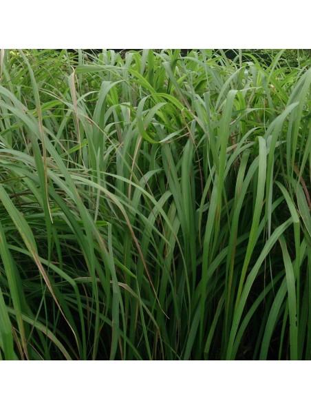 Citronnelle Bio - Huile essentielle Cymbopogon nardus 5 ml - Primavera