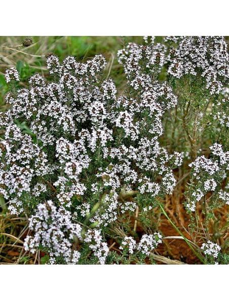 Thym Bio - Feuilles 100g - Tisane de Thymus vulgaris L
