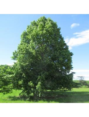 https://www.louis-herboristerie.com/17786-home_default/macerat-aqueux-de-tilleul-aubier-bio-antispasmodique-250-ml-herboristerie-cailleau.jpg