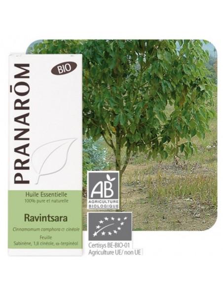 Ravintsara Bio - Huile essentielle de Cinnamomum camphora 10 ml - Pranarôm