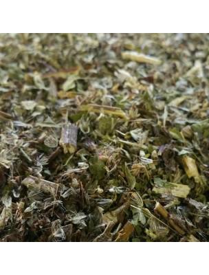 Eupatoire - Partie aérienne coupée 100g - Tisane d'Eupatorium cannabinum