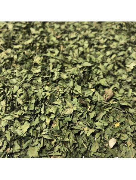 Ache des marais - Feuille coupée 100g - Tisane d'Apium graveolens