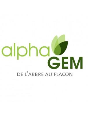 Aubépine Macérat de bourgeons Bio - Crateagus laevigata 15 ml - Alphagem