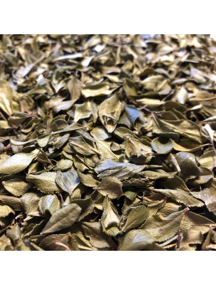 Buchu - Feuille coupée 100g - Tisane de Barosma betulina