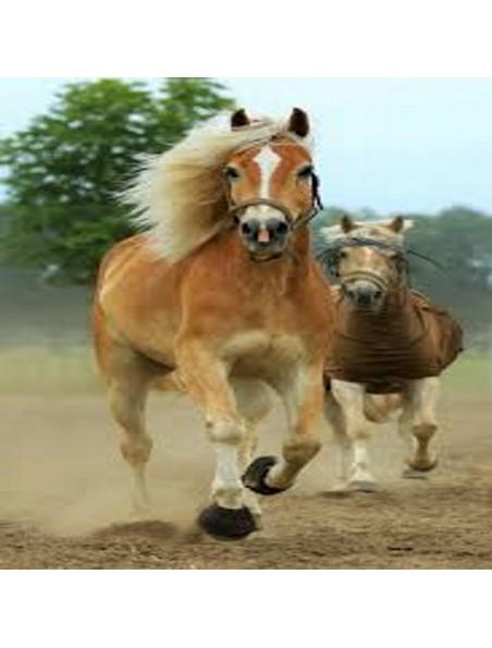 Lin & Fenugrec - Poil et peau des chevaux 2 Kg - Hilton Herbs