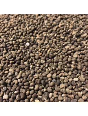 Ambrette - Graines 100g - Tisane Hibiscus abelmoschus.