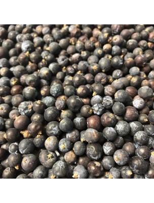 Génévrier Bio - Baies 100g - Tisane Juniperus communis