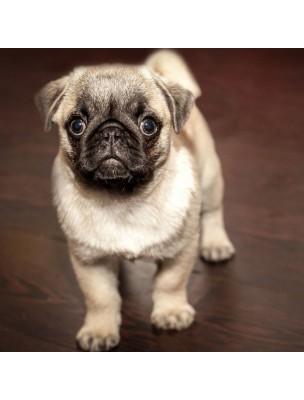 Detox Support - Détoxination du chien 60g - Hilton Herbs