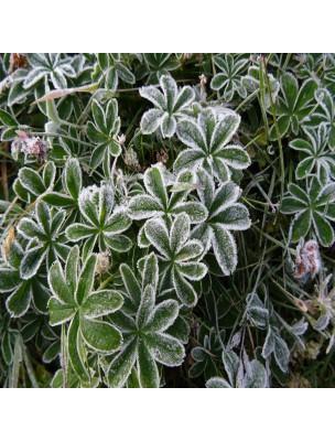 https://www.louis-herboristerie.com/21001-home_default/alchemille-des-alpes-diarrhees-teinture-mere-alchemilla-alpina-50-ml-herbiolys.jpg