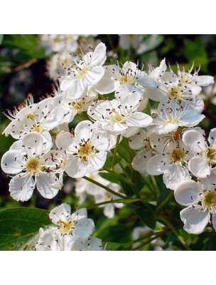 https://www.louis-herboristerie.com/21010-home_default/aubepine-epineuse-stress-et-anxiete-teinture-mere-cratraegus-oxycantha-50-ml-herbiolys.jpg