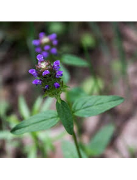 Brunelle - Sang & Peau -Teinture-mère Brunella/Prunella vulgaris 50 ml - Herbiolys