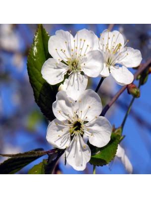 Cerisier Pédoncules fructifères rouge - Poudre 100g - Prunus cerasus
