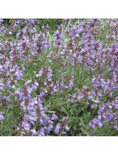 Sauge Bio - Feuilles coupées 100g - Tisane de Salvia officinalis L.