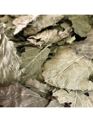 Cassis Bio - Feuilles entières 100g - Tisane de Ribes nigrum