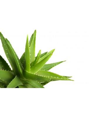 https://www.louis-herboristerie.com/22523-home_default/gel-pur-d-aloe-vera-vivant-bio-hydratant-250ml-bioflore.jpg