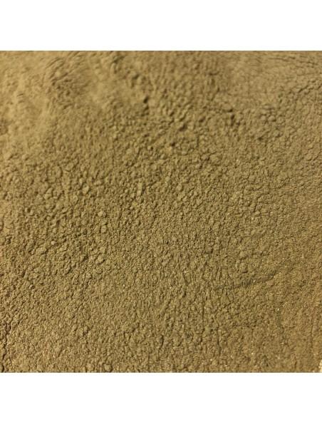 Amla - Fruit poudre 100g - Tisane d'Emblica offinalis / Myrobalani fructus