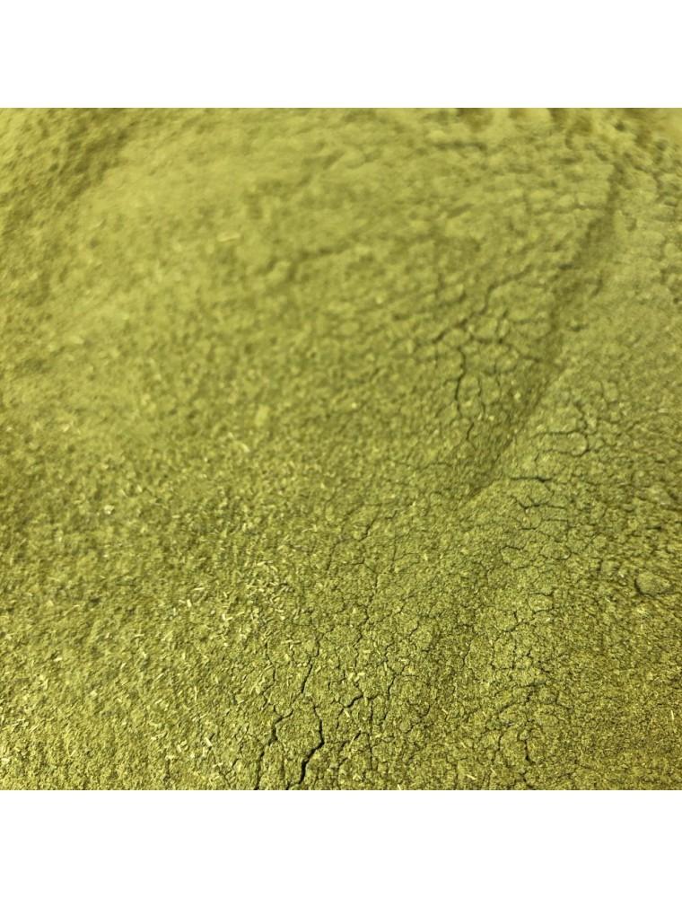 Moringa Bio - Feuille Poudre 100g - Tisane de Moringa oleifera