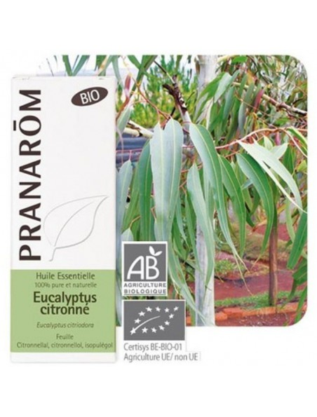 Eucalyptus citronné Bio - Huile essentielle d'Eucalyptus citriodora 10 ml - Pranarôm